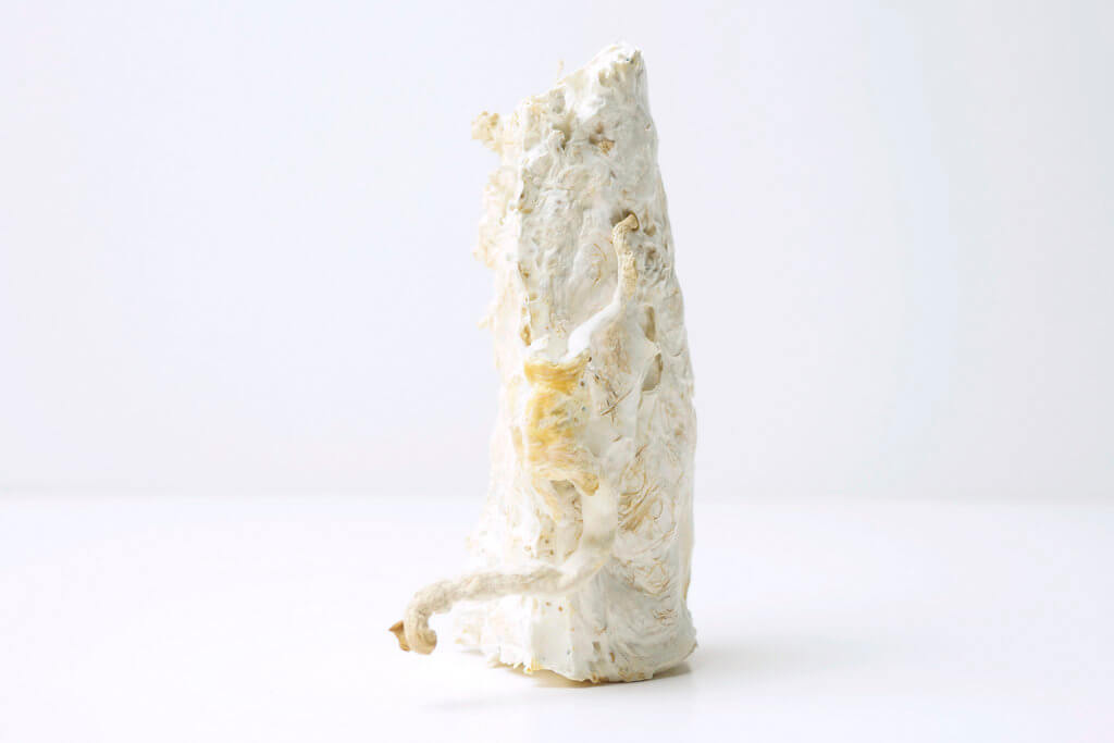 "Kristel Peters, ""Mycelium 1""."